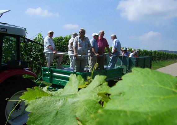 Impressionen Weinbergsrundfahrten Weinbau Orth