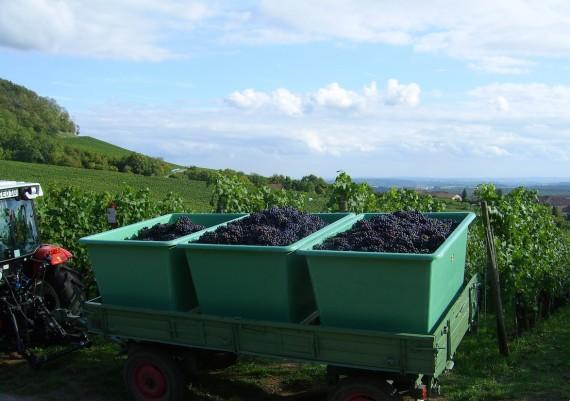 Impressionen Weinbau Orth