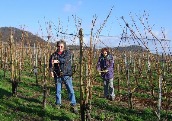 Frühling - Weinbau Orth, Sachsenheim-Hohenhaslach
