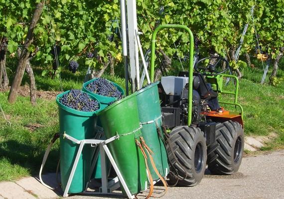 Impressionen Weinbau-Orth
